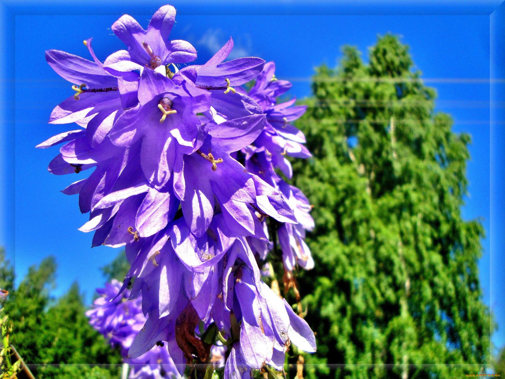 беседка для сада цветы фото
